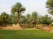 stock photo of riyadh  - Palm garden in the Riyadh city - JPG