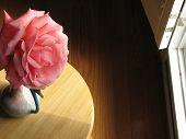 Large Pink Camellia