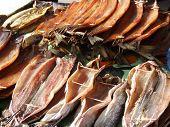 Fish from the Baikal lake