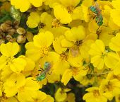 stock photo of xeriscape  - green bees on paper flower blooms - JPG