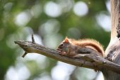 Small squirrel on the branch of a tree