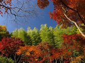 Colorful Autumn In Japan