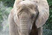 Wrinkly Elephant