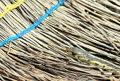 pic of harmless snakes  - Garter snake crawling on an old broom - JPG