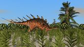 kentrosaurus in field