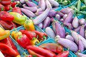 Okra, Eggplant, Pepper