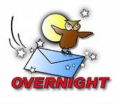 Overnight Owl