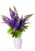 Beautiful Lupine Bouquet In Vase