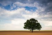 Lonely Tree On The Empty Field