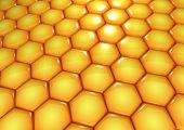 The Honey World