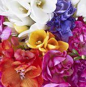 una fiesta de las flores de la Fresia