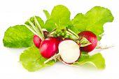 Fresh Juicy Radish With Green Leaves