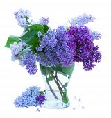 picture of lilac bush  - Bunch of Lilac in glass  vase isolated on white background - JPG