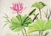 Aquarell Rosa Lotus Blume