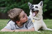 stock photo of heeler  - Child playing with his pet dog - JPG