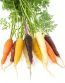Carrots_v