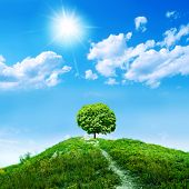 one green tree on blue sky