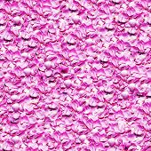 petals pink roses seamless background