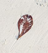 Beautiful Structured Leaves At The Beach