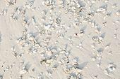 Shells At The Beautiful White Tropical Beach