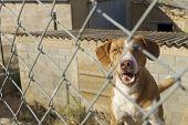watchdog after a metal fence