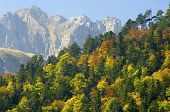 Fall forest in the Pyrenees mountains