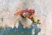 stock photo of spigot  - four wasps on an old rusty spigot - JPG