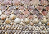 background created  with a group of shells  aligned