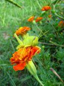 grasshopper beauty