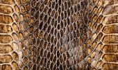 Snake skin texture closeup for background and wallpaper