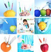 Genetic engineering laboratory. GMO food concept
