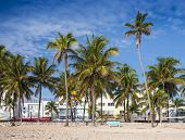 MIAMI, FLORIDA - JANUARY 6, 2014: Palm trees line Ocean Drive. The raod is the main thoroughfare thr