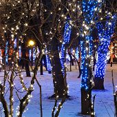 Night Illumination Of Moscow Boulevard
