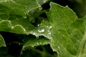 Close-up Of A Leaf And Water Drops