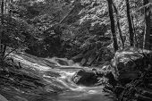 pic of brook trout  - A black and white image of a wild trout stream located in the mountains of central Virginia - JPG