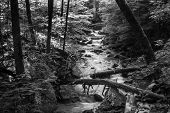 stock photo of brook trout  - A black and white image of a wild mountain trout stream located in mountains of central Virginia - JPG