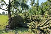 Fallen Tree Blown Over By Heavy Winds At The Park