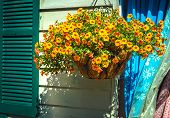 stock photo of planters  - A hanging flower basket outsidea shop in historic Smithville New Jersey - JPG