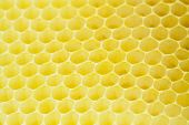 Honeycomb - cloe up texture