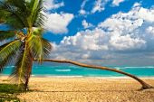 Palm Tree on a beach of the Caribbean Sea