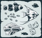 Vector set: vintage illustration of fish