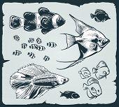 Vector set: vintage illustration of fish
