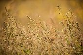 wild grass sunset wind