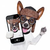foto of puppy dog face  - crazy silly dog with funny glasses showing tongue taking selfie - JPG