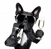 stock photo of french toast  - selfie of dog toasting for you in a cool pose - JPG