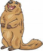 Marmot Animal Cartoon Illustration