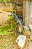 Squeezing juice from sugar cane - Bolivia