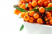 Постер, плакат: Sea buckthorn Berries