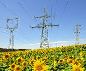 Electricity pylon in sunflower field