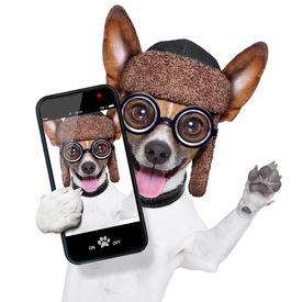 picture of tongue  - crazy silly dog with funny glasses showing tongue taking selfie - JPG